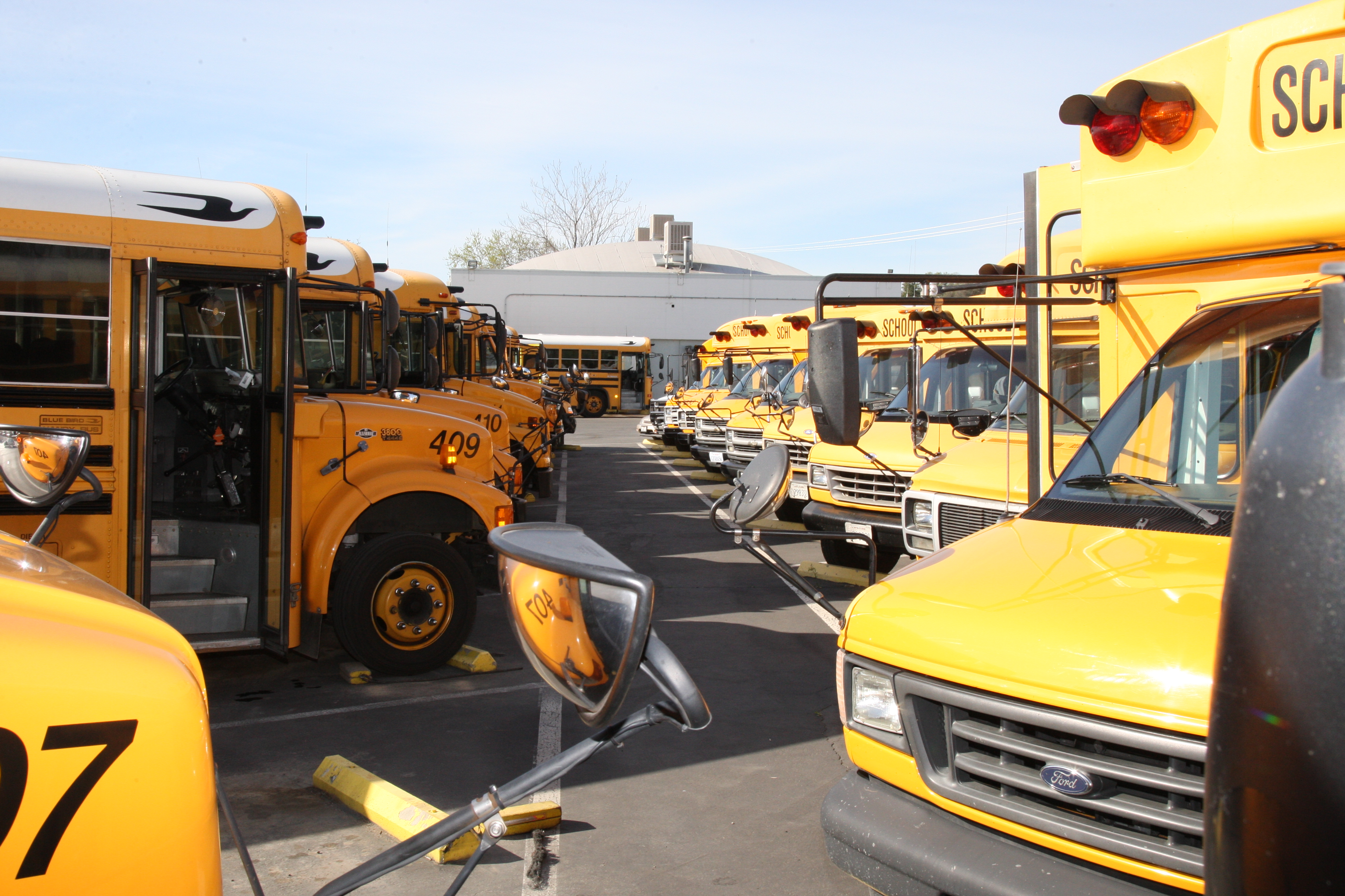 School buses neatly arranged in the parking lot.